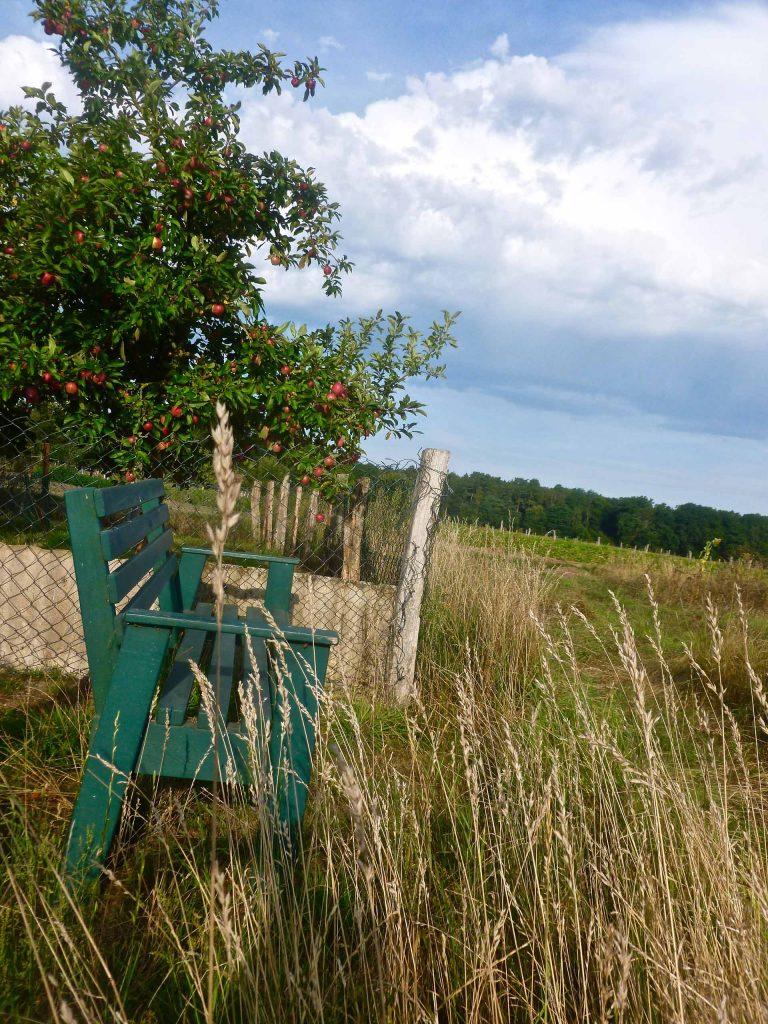 Bank hinter der Scheune mit Blick auf den Wald